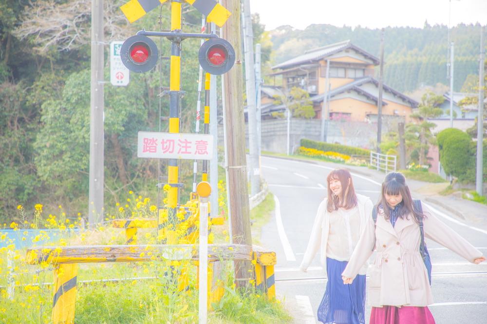 No,188 Photo📸 「桜+菜の花✖️小湊鉄道+いすみ鉄道=なかなかよい(笑⭐️」